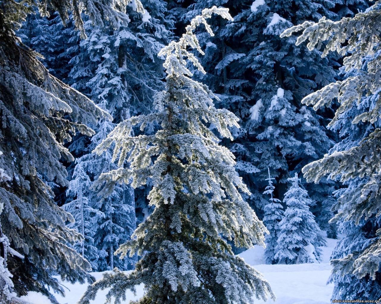 Пополнение обои зима смотрим здесь