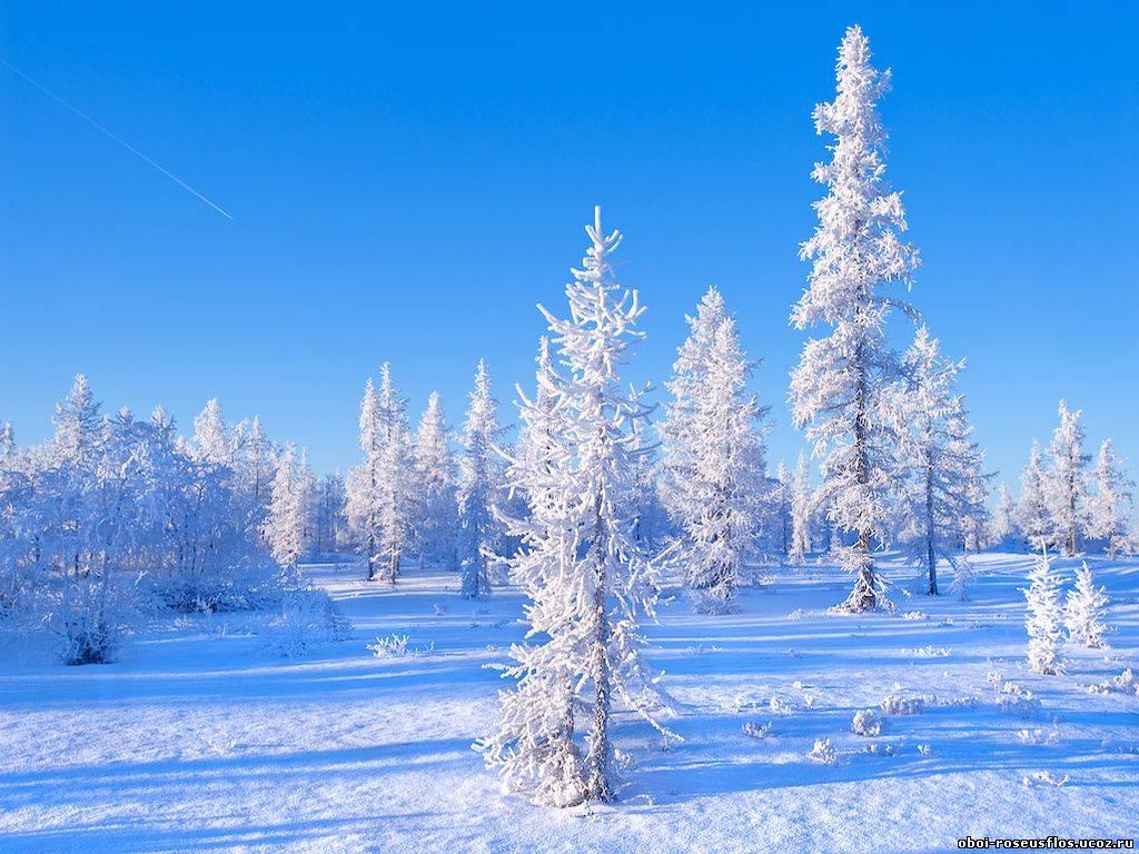 новые  зима